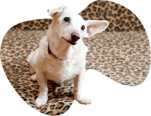 Informace o psím hospicu
