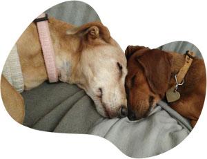 Jak pomoci psímu hospicu